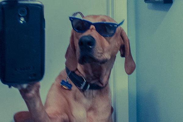 eko-selfie-600x400